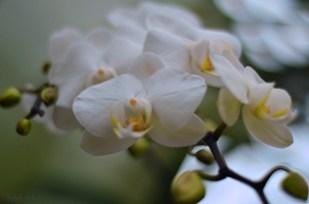 flowers7_s