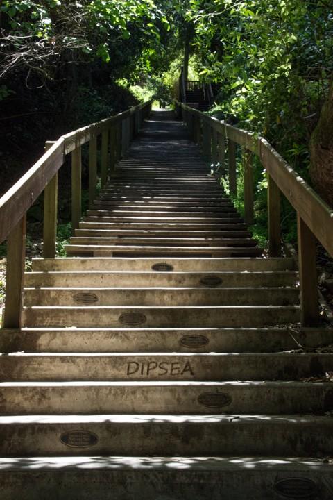 Dipsea Stairs - The Start - SKU: CA_DIP_0069