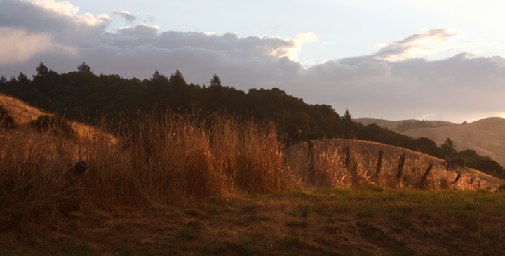 San Geronimo Valley golden grasses at sunset