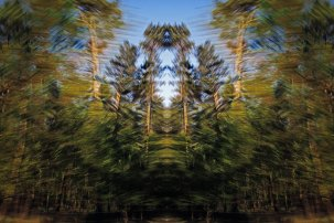 Tracing Forest Ghost II (2011) 90 x 60 cm C-Print