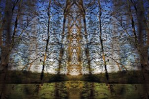 Tracing Forest Ghost IV (2011) 90 x 60 cm C-Print