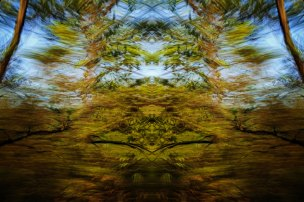 Tracing Forest Ghost VII (2011) 90 x 60 cm C-Print