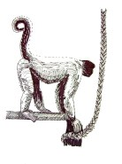 Weekly Sketch – Woolly Monkey – 29/07/12