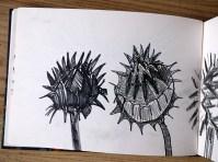 Cardoon Seedheads, graphite pencil, © Catherine Cronin