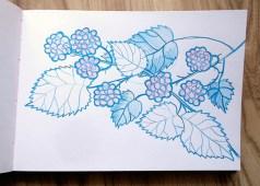 Blackberries, watercolour pencil © Catherine Cronin