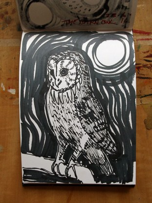 Barn Owl, pen drawing © Catherine Cronin