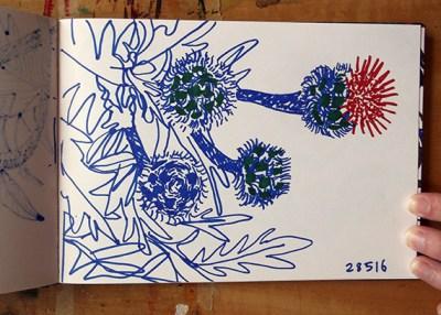 Centaurea Clementei, pen drawing © Catherine Cronin
