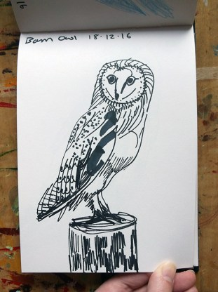 Barn Owl Sketch 1 © Catherine Cronin