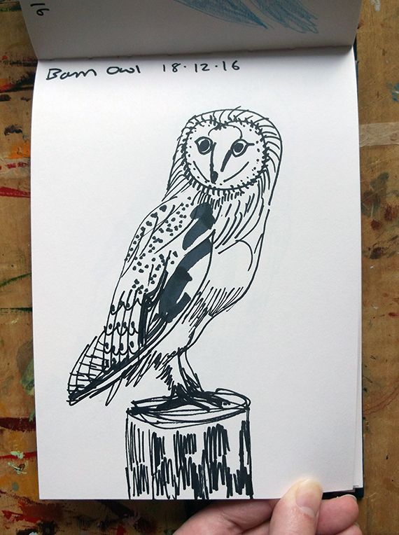 Barn Owl Sketch 1 © Catherine Cronin