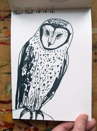 Barn Owl Sketch 3 © Catherine Cronin