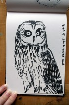 Short-eared Owl, black marker pen © Catherine Cronin