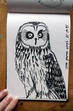 Short-eared Owl, black marker pen © Catherine Cronin