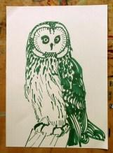 Short-eared Owl, green marker pen, A4 © Catherine Cronin