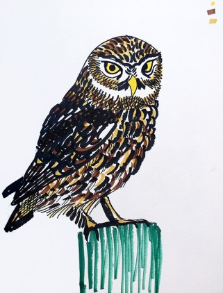 Little Owl, pen sketch © Catherine Cronin