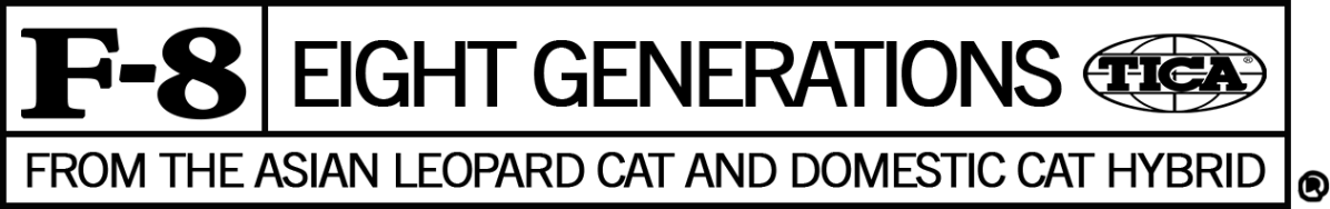 Bengal cat GENERATION