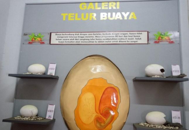 galeri telur buaya