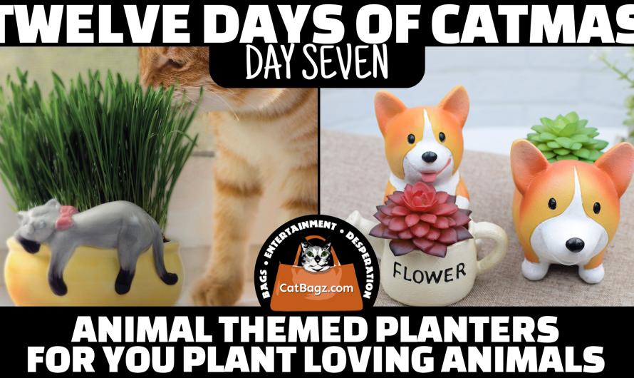 Twelve Days of Catmas – Day 7