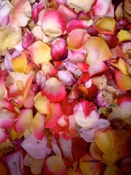 rose petals close