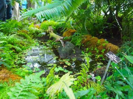 through the Garden Primeval