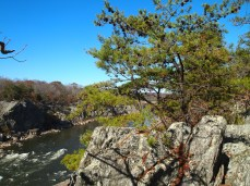 trees growing amongst boulders along Mather Gorge