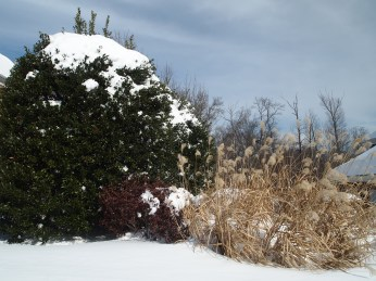 winter bushes