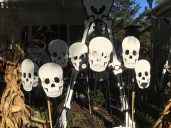 Skeletons galore