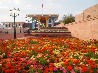 a rainbow of flowers and the Sultan's palace, Muscat, Oman