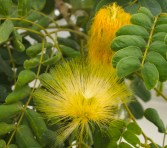 delicate flowers on the University of Nizwa campus