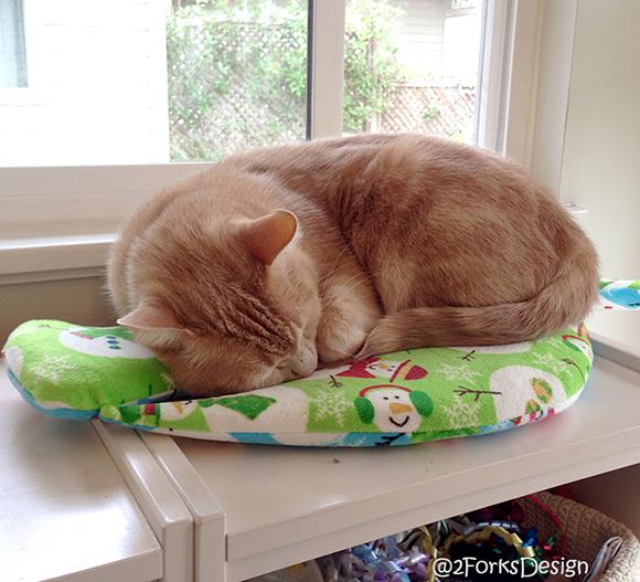 SleepingOnBookshelf