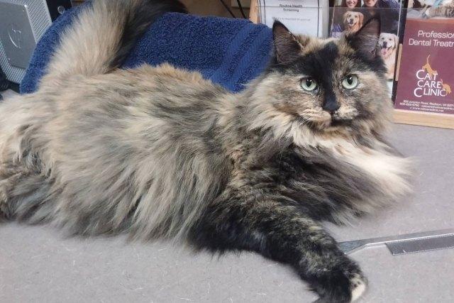 Hallie-Cat-Care-Clinic-Veterinary
