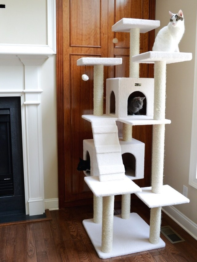 cats perched on cat tree