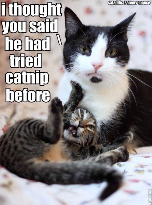 Catnip Gone Wrong! 1