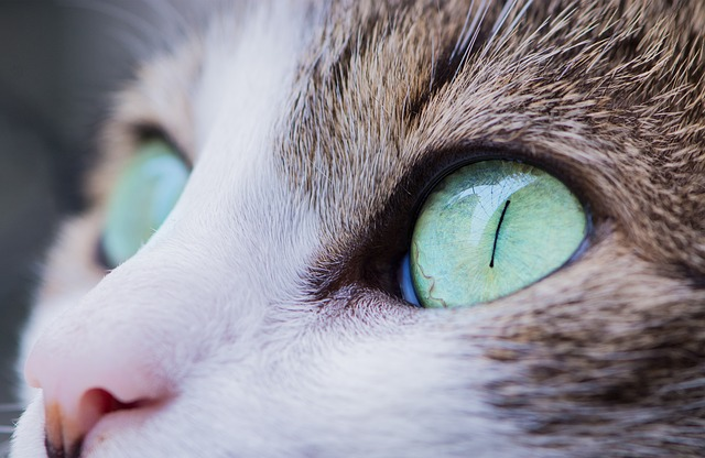 how do cats see color