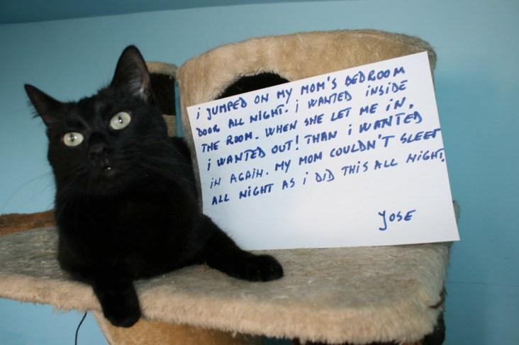 Cat Confessions 1