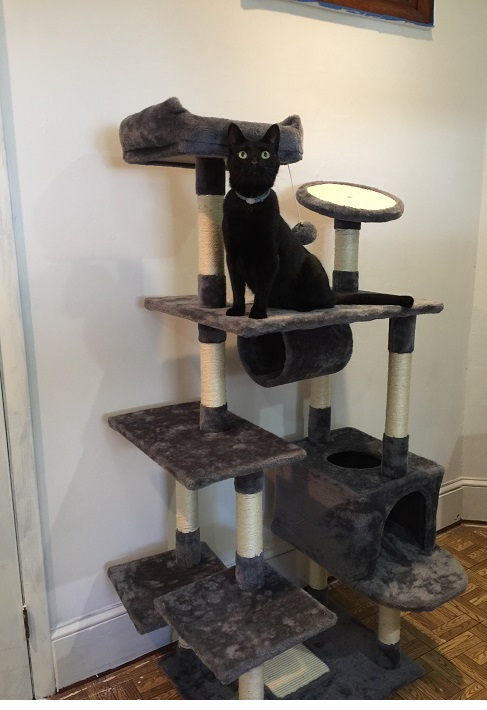 Yaheetech Cat Tree Review - From A Cat & Her Human 10