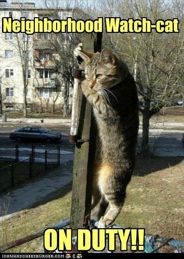 Neighborhood Watch Cat 3