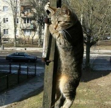 Neighborhood Watch Cat 4