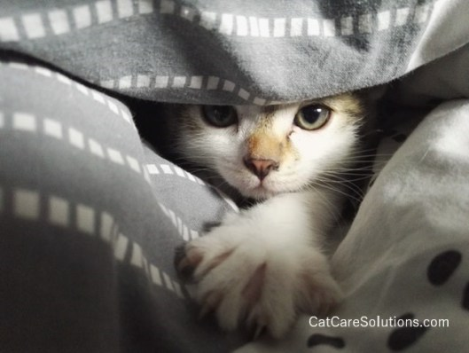 keep your cats calm during home improvements