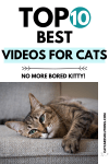 10 of the Best Videos Cats Watch In 2020