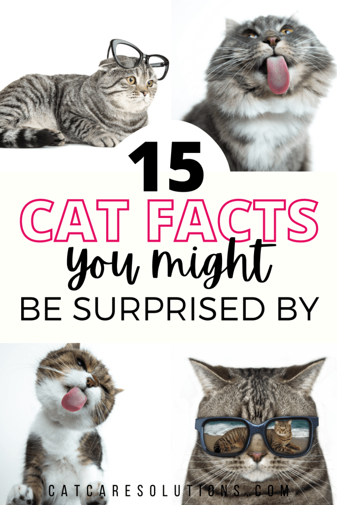 15 cool cat facts