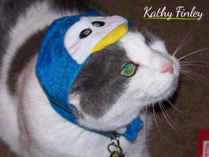 Kathy Finley guest post for Cat Care Solutions - Clio, the one-eyed and three-legged cat
