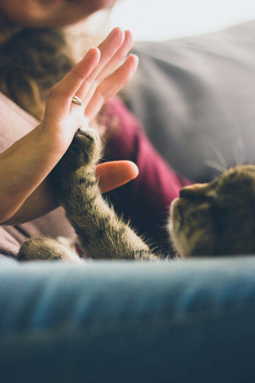 be the best cat parent high five