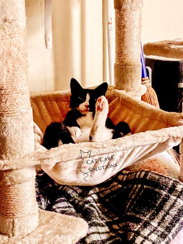 my cat pips in his hammock