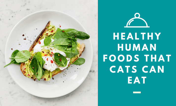 10-Healthy-Human-Foods-That-Cats-Can-Eat