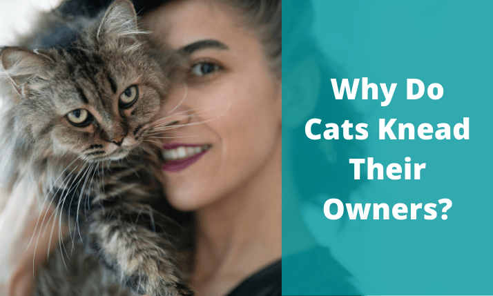 Why-Do-Cats-Knead-Their-Owners featured image