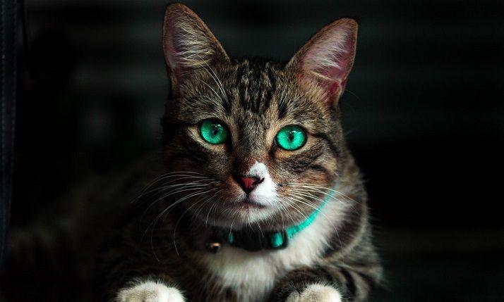 cute cat showing ears