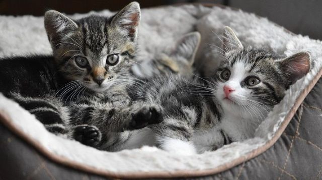 two kittens in the bed