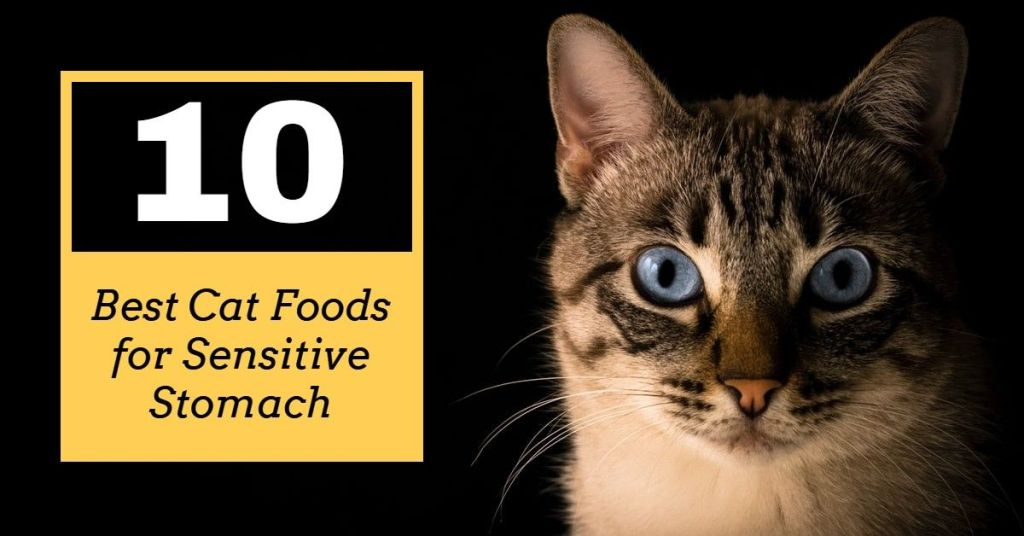 10 Best Cat Foods for Sensitive Stomach in 2020