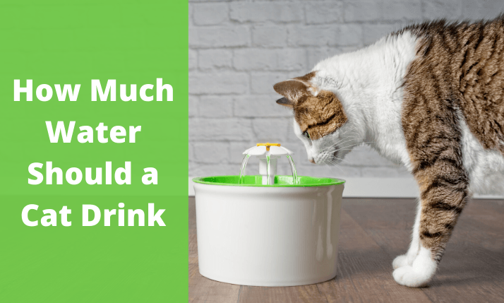 A big white cat drinking water in the water bowl