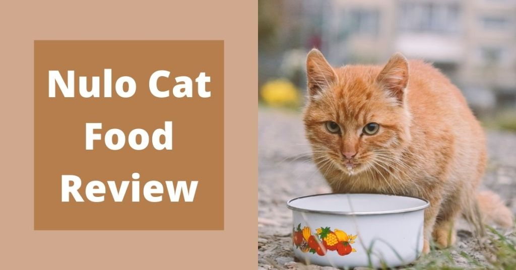 Nulo Cat Food Review Featured image